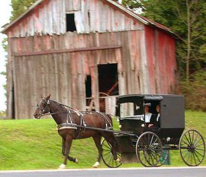 Amish couple in a horse-drawn buggy in rural H...